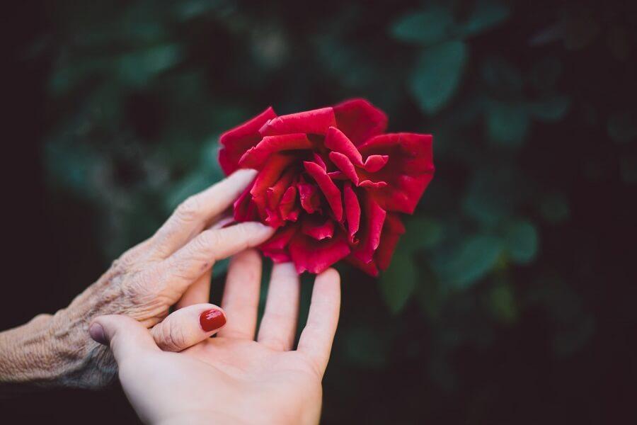 Как установить со свекровью добросердечные отношения